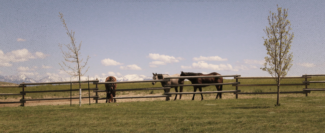 best-equine-clinic-montana_01